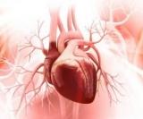 Самый важный минерал для сердца